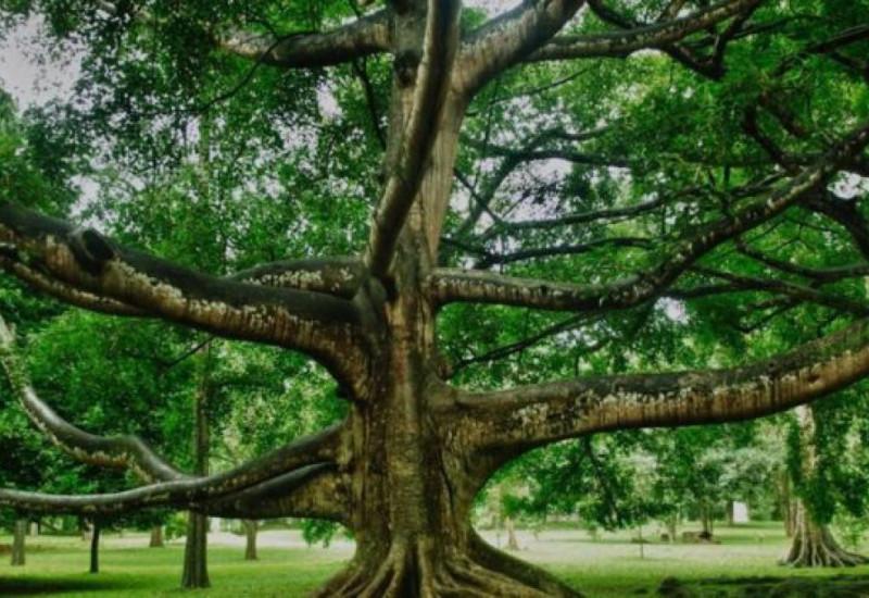 """ A quien buen árbol se arrima, buena sombra le cobija""  and "" a buen entendedor, pocas palabras bastan"""