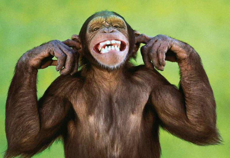 "¡Si alguien te dice que eres muy ""mono"" no creas que te pareces a un orangután!"