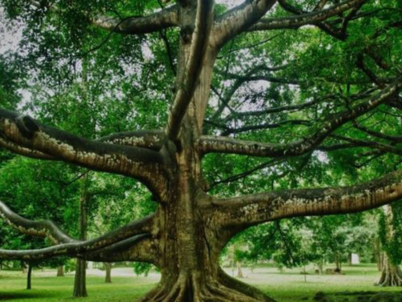 """"""" A quien buen árbol se arrima, buena sombra le cobija""""  y  """"A buen entendedor, pocas palabras bastan"""""""